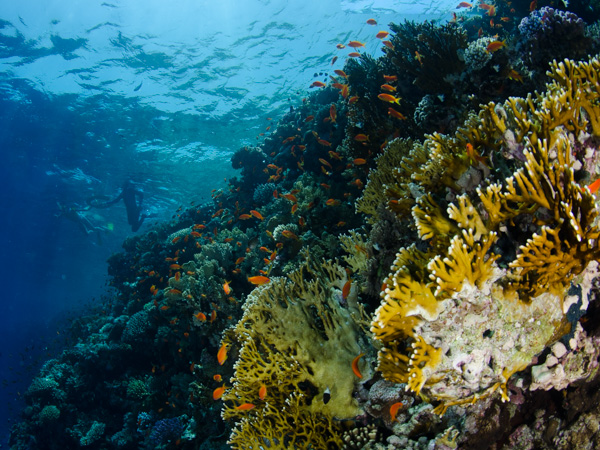 Our_Reef_Discovery_programme_enables_you_to_snorkel_some_of_the_best_reefs_in_the_Sharm_el_Sheikh.jpg